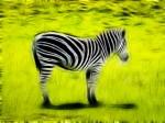 Fractalius image of a zebra